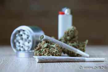 Celstraffen tot vijf jaar voor cannabisplantage met 3.000 planten in Aartselaar - Gazet van Antwerpen