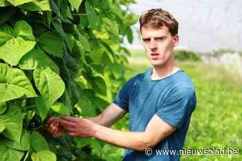 """Land- en tuinbouwers willen graag heropstarten: """"Je mag het belang van boerenmarkten niet onderschatten"""" - Het Nieuwsblad"""