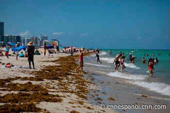 Florida va camino de ser el epicentro del coronavirus en EE.UU., según modelo - CNN