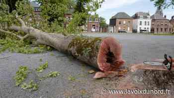 Avesnes-sur-Helpe : des arbres plus que centenaires abattus à la Rotonde, par sécurité - La Voix du Nord