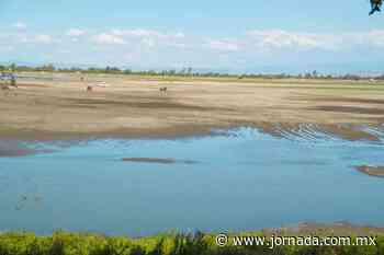 Reportan baja en caudal de la Laguna de Zumpango - La Jornada