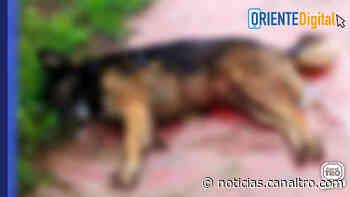 A piedra presuntamente, fue asesinado un perro en Ragonvalia - Canal TRO