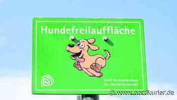 Hunde in Neubrandenburg sollen mehr Platz zum Toben bekommen - Nordkurier