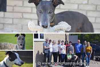 Behind the scenes: Barley Greyhound Sanctuary Waltham Abbey - Epping Forest Guardian