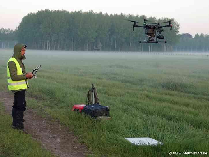 Natuurpunt schakelt drone in om broedgebied van de grutto te bestuderen
