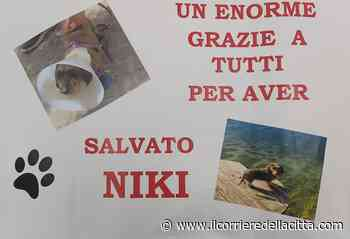 Cagnolino azzannato in spiaggia a Torvaianica da un pitbull: «Niki ce l'ha fatta!» - Il Corriere della Città