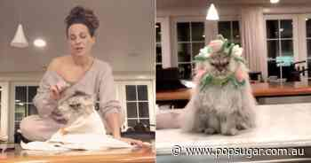 Kate Beckinsale Is the Crazy Cat Lady I Aspire to Be — See the Funniest Videos of Her 2 Cats - POPSUGAR Australia