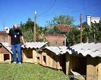 Apenados do Presídio de Arroio do Meio fabricam casinhas para cachorros abandonados - independente