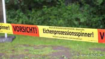 Eichenprozessionsspinner breitet sich in Papenburg weiter aus - Neue Osnabrücker Zeitung