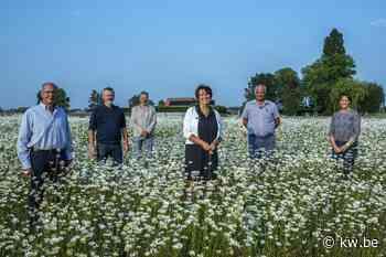 Ledegem organiseert opnieuw bebloemingswedstrijd - Samenleving - Krant van Westvlaanderen