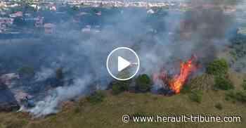 MARSEILLAN - Un incendie ravage quelques hectares de végétation - Hérault-Tribune