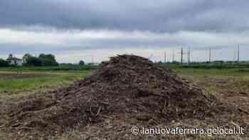 Alberi tagliati lungo la ferrovia Ferrara-Suzzara, aziende ed enti denunciati dai carabinieri - La Nuova Ferrara