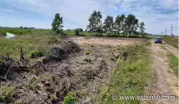 Distrutto un bosco lungo la Ferrara-Suzzara, denunciati gli enti preposti alla 'manutenzione' | estense.com Ferrara - Estense.com
