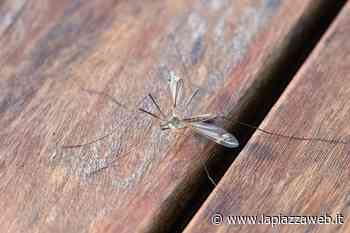 Zanzare, disinfestazioni al via - La Piazza