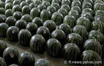 Etampes : Les douanes saisissent 552 kg de cannabis et… 19 tonnes de pastèques et de melons - Yahoo Actualités