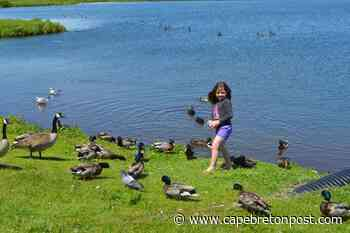 Having a ducky time in Glace Bay - Cape Breton Post