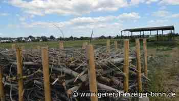Umweltfrevel in Sankt Augustin: Unbekannte missbrauchten altes Silo jahrelang als Müllkippe - General-Anzeiger