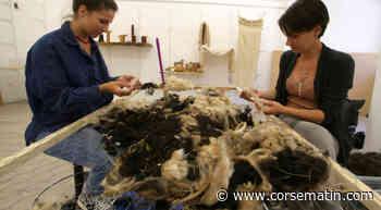 Corte : une feutreuse au Fablab pour faire revivre la laine - Corse-Matin