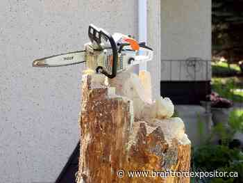 Chainsaw carver leaves mark on Stony Plain - Brantford Expositor