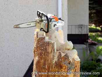 Chainsaw carver leaves mark on Stony Plain - Woodstock Sentinel Review