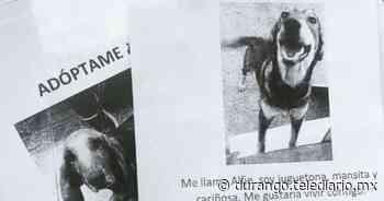 Hacen campaña para dar a conocer animales en adopción en Durango - Telediario Durango