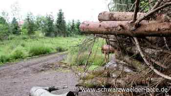 Rangendingen: Das Tannenwäldle hat es schlimm erwischt - Rangendingen - Schwarzwälder Bote