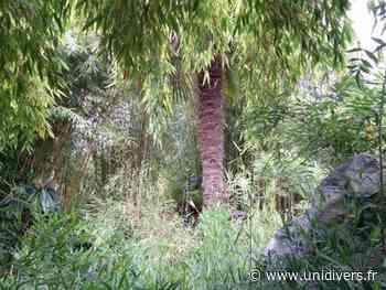 Explication sur comment fonctionne un bambou Jardin Émeraude samedi 4 juillet 2020 - Unidivers