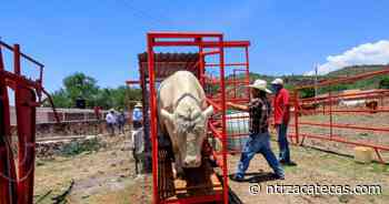 Apoya gobierno estatal a ganaderos de Jalpa - NTR Zacatecas .com