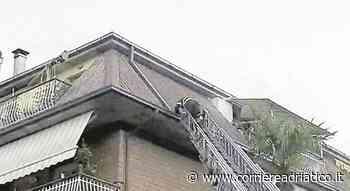 Monteprandone, l'incredibile fuga della tartaruga: i vigili del fuoco devono salire sul tetto... - Corriere Adriatico