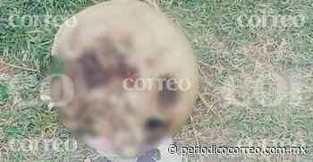 Encuentran cráneo humano en Valle De Santiago - Periódico Correo