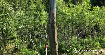 2 dead after single-vehicle crash in Quispamsis, N.B. - Globalnews.ca