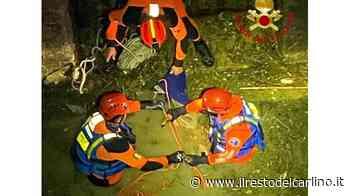 Castelplanio: capriolo prigioniero del canale - Il Resto del Carlino