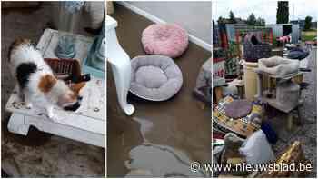 Kattenasiel start crowdfunding nadat hele opvang overstroom:... (Ingelmunster) - Het Nieuwsblad