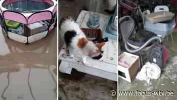 Kattenasiel Ingelmunster zwaar getroffen door wolkbreuk - Focus en WTV