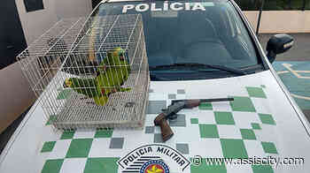 PM Ambiental apreende arma e papagaios presos em cativeiro em Palmital - Assiscity