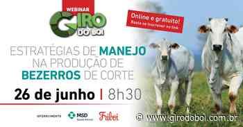 Sanidade de bezerros e estratégias da cria serão temas de webinar Giro do Boi - Canal Rural