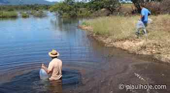 Codevasf realiza limpeza e recuperação de barragens em Bom Jesus da Lapa (BA) - Piauí Hoje