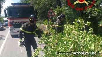 Chiaravalle, albero minaccia di cadere sulla statale. Tagliato - il Resto del Carlino