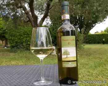 Doppio premio per i vini di Fiorano all'Internationaler Bioweinpreis - Piceno Oggi - Piceno Oggi
