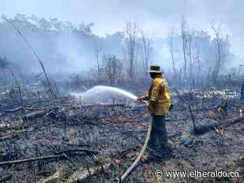 Brigadistas y bomberos de Sitionuevo atienden incendio en Isla Salamanca - El Heraldo (Colombia)