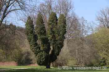 Mehrere Bäume geraten in Brand - Westfalen-Blatt