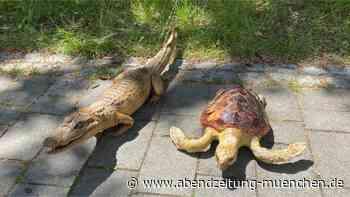 Ungewöhnlicher Fund - Ismaning: Bub (13) findet ausgestopften Alligator in der Isar - Abendzeitung