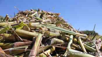 Could sugarcane regions pioneer a bioplastics industry?