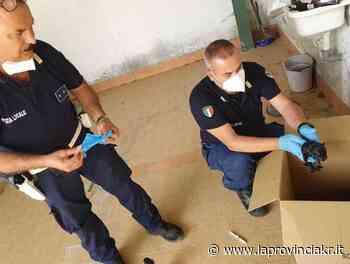 Isola Capo Rizzuto, salvano cuccioli di cane abbandonati in un sacco chiamando i Vigili - La Provincia Kr
