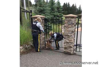 Lake Country RCMP help baby deer through fence – Salmon Arm Observer - Salmon Arm Observer