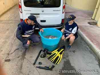 Capitaneria di Porto di Ortona e Carabinieri sequestrano oltre 60 Kg di polpi - Ultime Notizie Abruzzo - - CityRumors.it