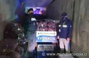 Descubren más de 11 toneladas de recursos pesqueros ilegales en Ancud - Mundo Acuícola
