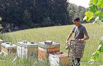 Gesundheitszeugnis für die Bienen - Freyung-Grafenau - Passauer Neue Presse