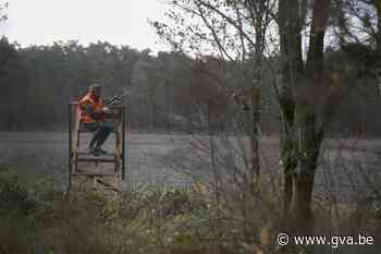 Ondanks jachtverbod door corona blijft everzwijnpopulatie st... (Dessel) - Gazet van Antwerpen
