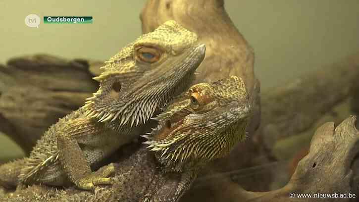 Natuurhulpcentrum barst uit zijn voegen en stelt dieren ter adoptie